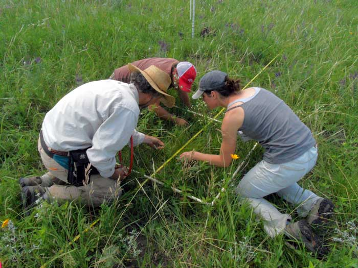 Three individuals collecting data from a transect.