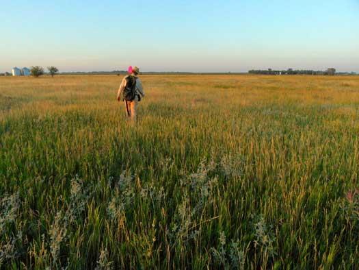 Fred walking through the prairie.