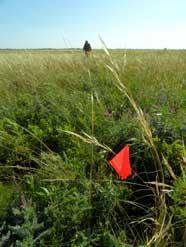 An orange flag in the prairie.