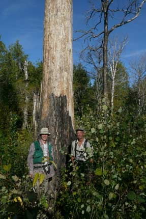Norm and Mike standing by a burned white pine in the Gaskin Lake stand.