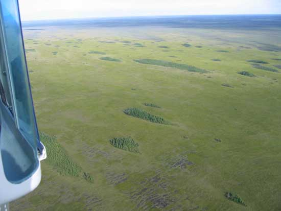 Overhead view of Beltrami COunty's Red Lake Peatland with scattered islands.