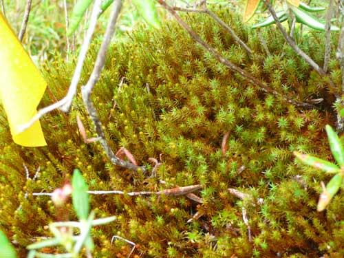 Overhead view of a plot of mosses.