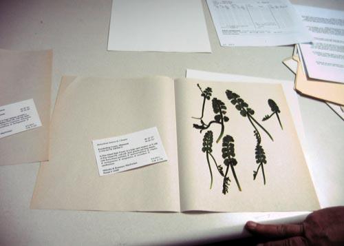 botrychium specimen