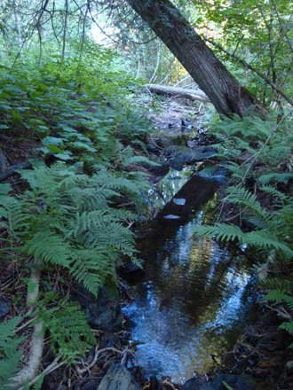 fern habitat