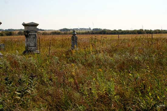 Prairie forbs and grasses in the Prairie Cemetery in Mower County.