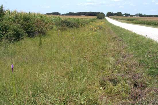 Roadside prairie