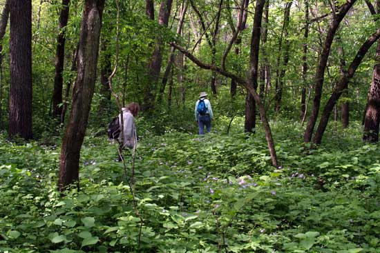 Two volunteers walking in the forest.