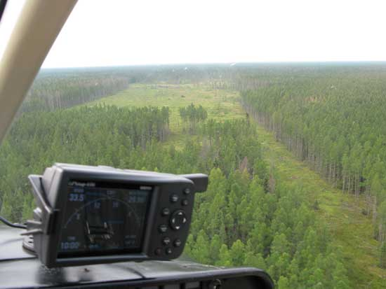 View from the window of a helicopter of a clearing in a tamarack forest.