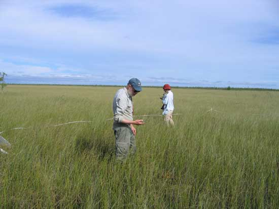 Dr. Paul Glaser and Erika Rowe marking a vegetation plot in the western water track.