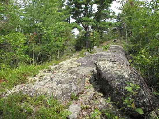 Bedrock outcrop