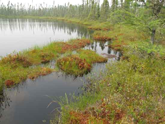 Un-named pond and yellow-eyed grass habitat