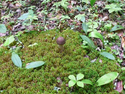 reserved mushroom