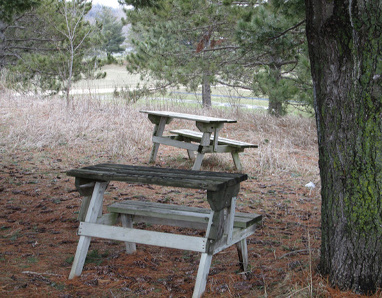 Savannah Springs School Forest in Chatfield has convertible benches. Each can be used as a desk, bench or two can be put together to make a picnic table.