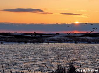 image of Lac qui Parle lake at sunset