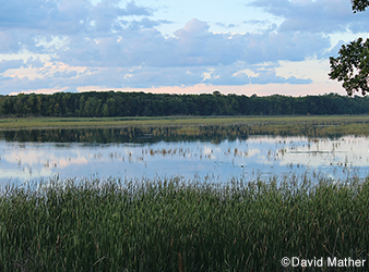 photo of Ogechie Lake with wild rice.