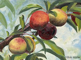 illustration of wild plums