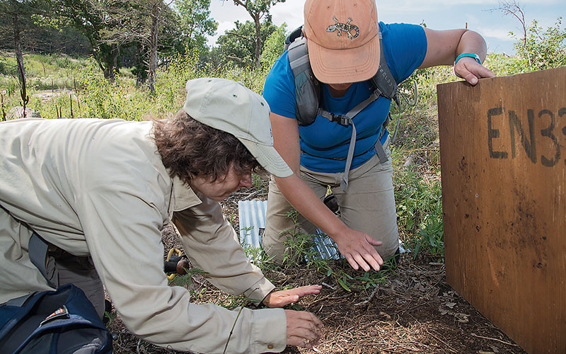 Two nongame wildlife specialists examining the ground